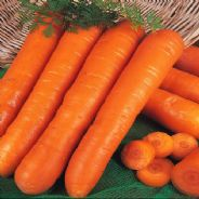 Carrot Early Nantes 2 - Appx 1000 Pelleted Seed - Bulk Discounts available